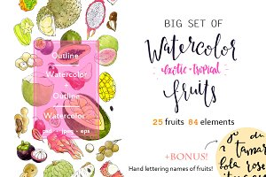Big set of watercolor exotic fruits