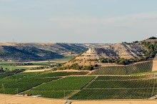Vineyards in Peñafiel