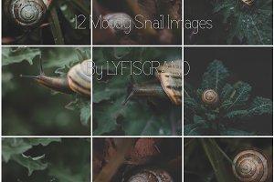 Moody Snail Macro Set