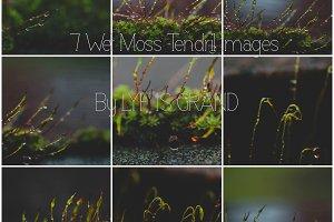 Moody Wet Moss Tendrils