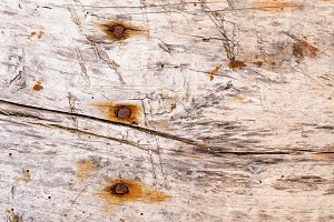 Rusty nails in a wooden plank