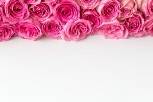Styled Stock soft pink roses