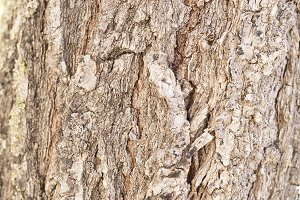 Bark of a tree photographed closely