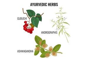 Ashwagandha, guduchi cordifolia, andrographis flowering plant realistic vector illustration