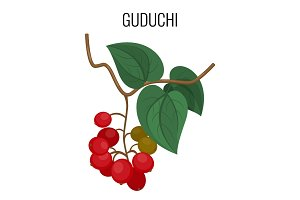 Guduchi branch with red berries and leaves isolated on white background.