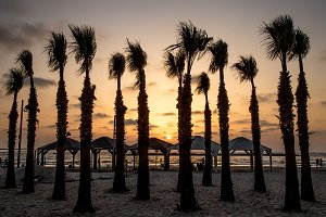 Sunset Palm Silhouettes