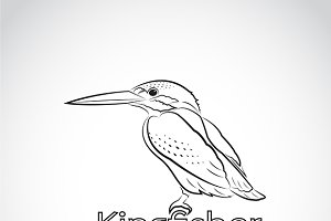 Vector of Common kingfisher.