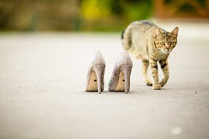 Cat walks around woman's shoes
