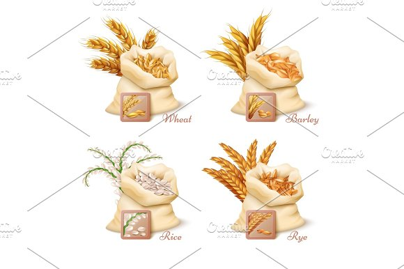 Agricultural Cereals Wheat Barley Oat And Rice Vector Set