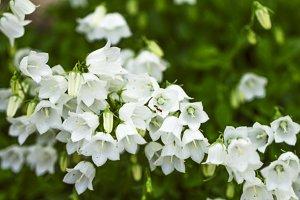 Flowers secrets