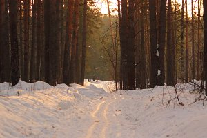 Winter road , forest with pine trees at sunset