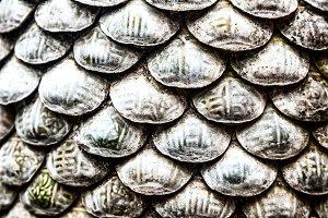 Seashells surface