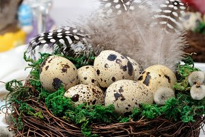Quail eggs in a nest with green moss
