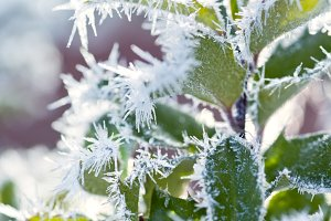 Winter - Hoar frost