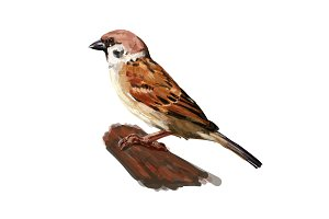 tree sparrow holding on twig