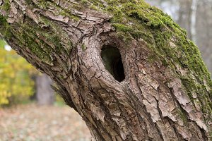 Tree trunk with hole in autumnal forest