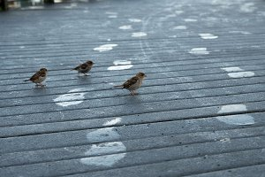 Footprints and Early Birds