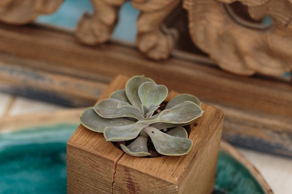 Succulent in wooden box