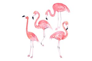 Watercolor Flamingos Set