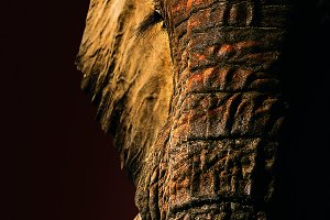 Moody Elephant portrait