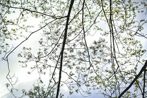 Spring branches of tree