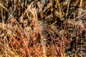 Multicolour autumn dry grass