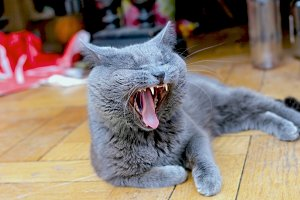 Happy life of cat