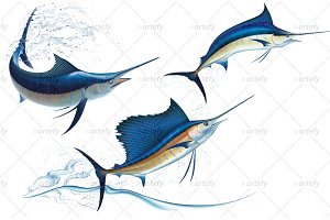 Blue Marlin and Sailfish (3x)