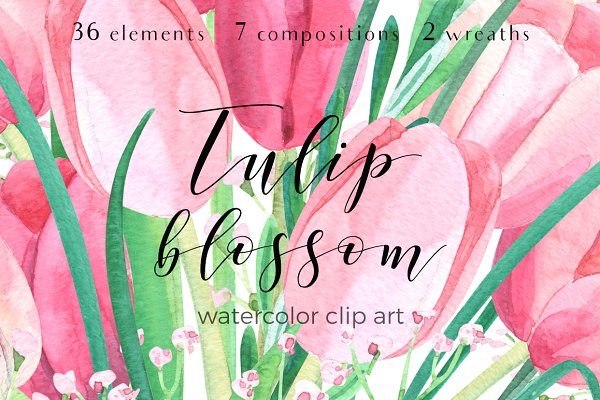 Tulip blossom. Watercolor clip art