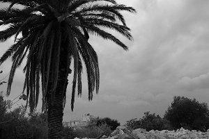 Palm Tree Rubble