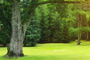 Green trimmed lawn in summer forest