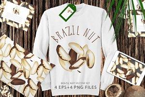 Brazil nut vector set