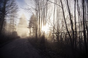 Sun rays penetrating the forest