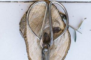 antique metal bonsai scissors