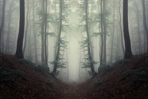 Symmetrical mysterious forest