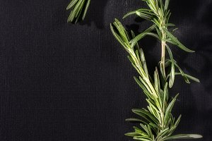 Rosemary herb on chalk black board