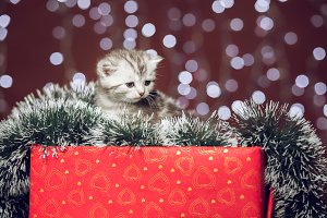 Kitten sitting on a gift box with bokeh background
