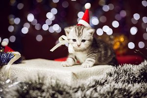 Cute kitten wearing santa hat