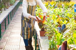 Serious woman gardener taking care of plants in greenhouse