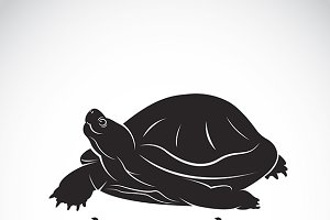 Vector of a turtle. Reptile Animal.