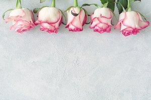 Pink roses, floral frame