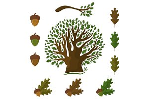 Set of icons on an oak tree with leaves and acorns.Vector illust
