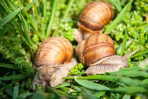 three snails are crawling in the green grass