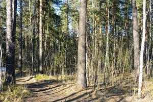 Spring forest,