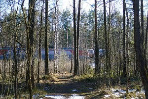 Spring forest and railway