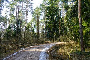 Road in the forest, in the spring