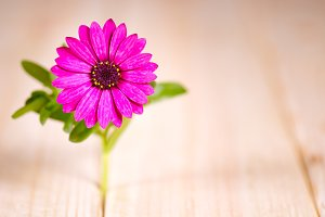 flower on wooden table