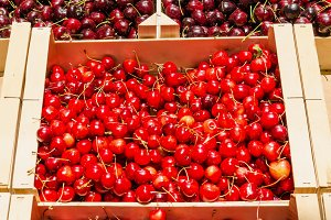 Red cherries. Fresh fruit