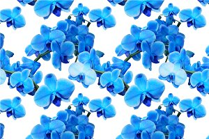 2 Vector Patterns with Blue Orchids