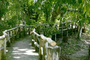 Jungle Board Walk